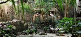 Jungle Cabana 2